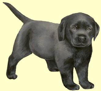 Take in a labrador retriever breed dog