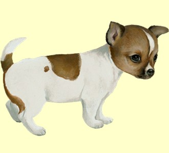 Chihuahua ##STADE## - coat 60